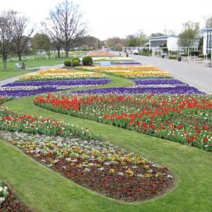 Wechselflor: Großes Blumenbeet ega Erfurt