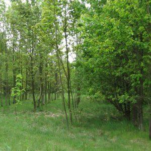 Revitalisierung von Ackerflächen am Boxberg bei Gotha
