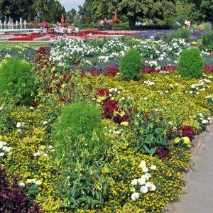 ega Erfurt, Großes Blumenbeet, Sommer 2009